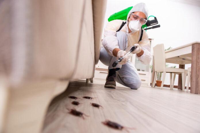 Killer Carpet Cleaning & Pest Control